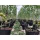 NFT Hydro Base Turnkey Solution (10 x 30m Greenhouse)