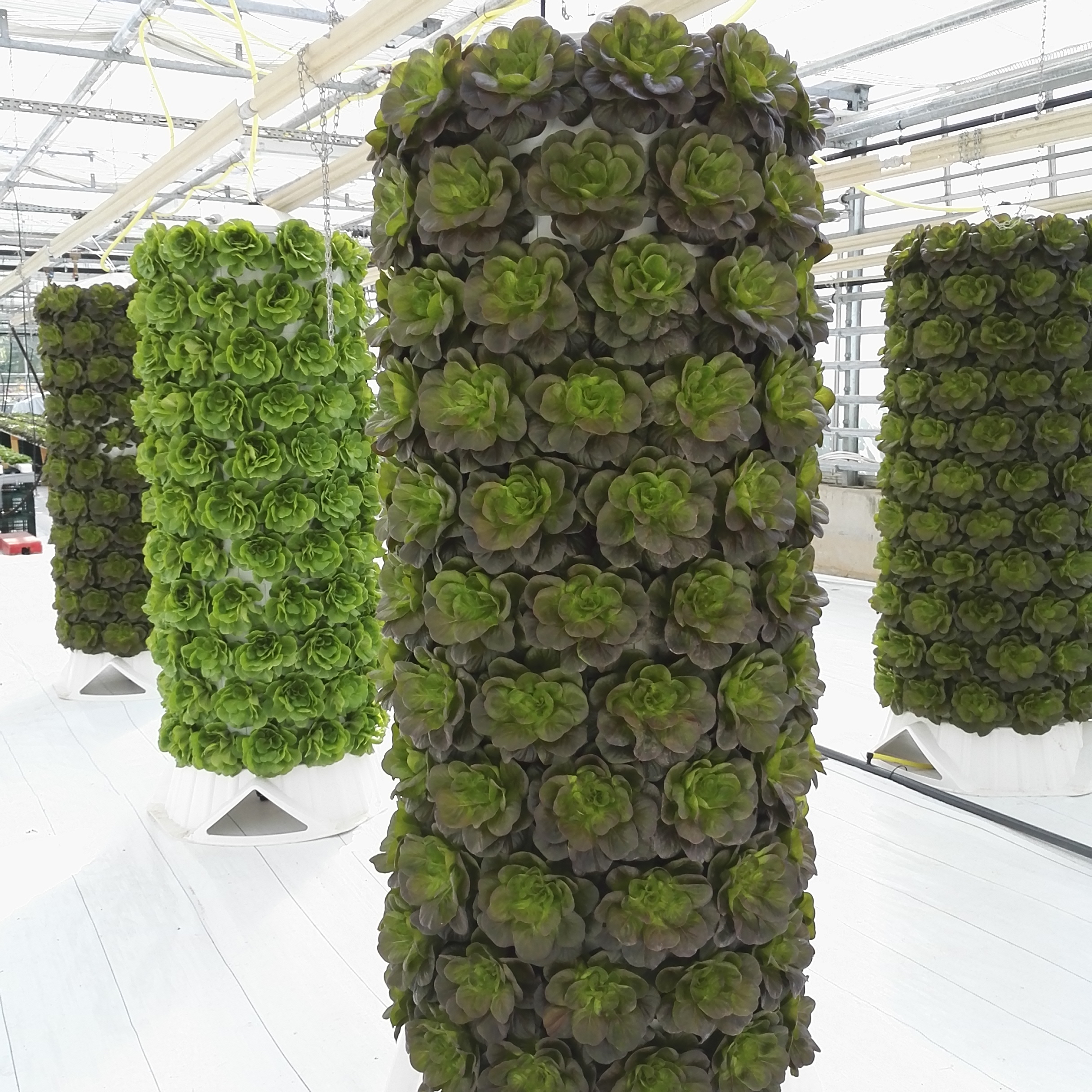 Grow Hydroponics Vertically