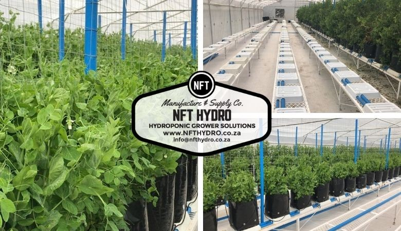 NFT Hydro Commercial Projects
