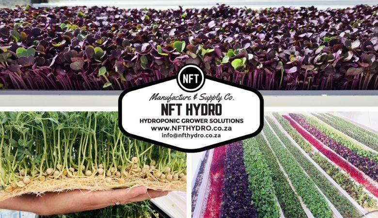Start Growing Microgreens Today